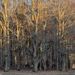 Bare trees in sunshine - Stock Photo
