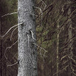 Tree trunk in spooky forest — Stock Photo #24432639