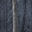 Tree trunk in spooky forest — Stock Photo #24456261