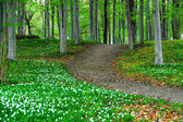 Park with wood anemone flowers — Stock Photo