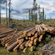 Pile of timber — Stock Photo