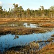 Swedish swamp — Stock Photo #25772601