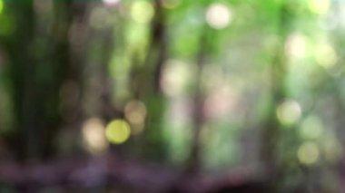 Forêt floue — Vidéo