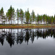 Scandinavian lake with conifers — Stockfoto