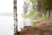 Bouleau de lac brumeux — Photo