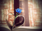 Blue cornflower and book pages — Stock Photo