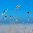 Frozen reeds — Stock Photo #28028885
