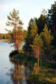 Scandinavian river — 图库照片