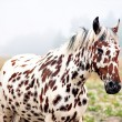 Spotty horse — Stock Photo #28953915