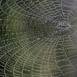 Cobweb with morning dew — Stock Photo
