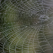 Stock Photo: Cobweb with morning dew
