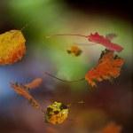 Autumn leaves of aspen tree — Stock Photo
