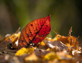Leaf in autumn colors — Stock Photo