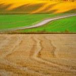 veld in de herfst landschap — Stockfoto