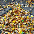 Seeping up autumn leaves — Stock Photo