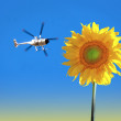 Sunflower and helicopter — Stock Photo