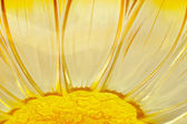 Flower shaped glass — Stock Photo