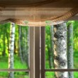 Birch trees seen through window — Stock Video