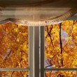 Birch trees autumn outside windows — Stock Video