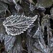 Frozen leaf — Stockfoto