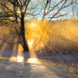Sunbeams filtered through bare tree — Stock Photo