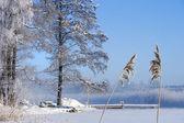 Frozen lake with jetty — Stockfoto