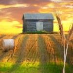 Rural landscape — Stock Photo #38017175