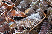 En automne, les feuilles de fougère — Photo