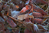 Fern leaves in autumn — Stock Photo