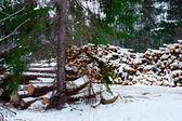 堆的木材 — 图库照片