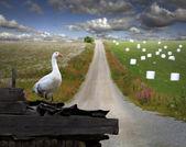 L'Oie dans le paysage rural — Photo