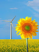 Sunflower and wind power — Stock Photo
