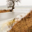 Bare tree in foggy landscape — Stock Photo