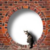 Eski tuğla duvar içinde dairesel çerçeve içinde kedi — Stok fotoğraf