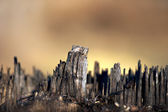 Tree stump skyline — Stock Photo
