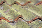 Tiled roof with fungus — Stock Photo