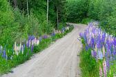 Swedish country road — Stock Photo