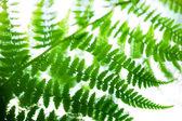 Fern leaves on blue sky — Stock Photo