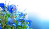 голубые летние цветы — Стоковое фото