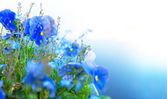 Blå sommarblommor — Stockfoto
