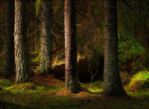 Forest in magic evening light — Stock Photo