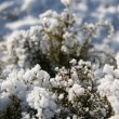 Texture of grass with snow — Stock Photo