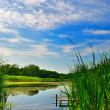 Lake with reeds under blue cloudy sky - Stock Photo