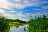 Lake with reeds under blue cloudy sky — Stock Photo