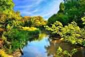 Scenic river in autumn forest — Stock Photo