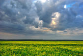 Cloudy sky over yellow field — Stock Photo