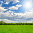 Spring green field with sun — Stock Photo #47697681