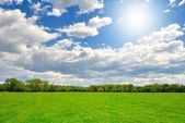 Spring green field with sun — Stock Photo
