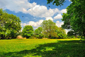 Shady trees on green meadow — Stock Photo