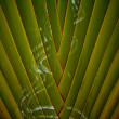 Tropical Background texture — Stock Photo